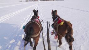 View from the back of horses pull it through a snowy field stock video