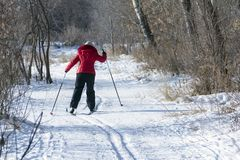 The view from the back of the woman in a red jacket and black pants is skiing. Snowy background with skis between trees and copysp stock images