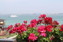 View from the balcony of the beautiful red flowers and the sea Bay with boat and ships royalty free stock photo