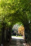 View of the bamboo alley in Louangphabang, Laos. Copy space for text. Vertical. Royalty Free Stock Photo