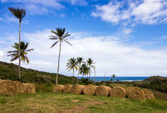View of Barbados East Coast from a country farm in St. Andrew. View of Barbados East Coast from an elevated country farm in St. Andrew. Shows large Bales of Hay Stock Image