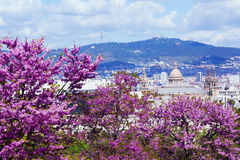 View of Barcelona in spring Stock Image