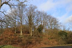 Grove of oak trees in front of sky, mild winter season in Germany at Middlerhine area. View of barren Oak trees along nature trail in hills, mild winter season Stock Images