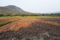 A view of the barren rice field , Thailand. A view of the barren rice field royalty free stock photos
