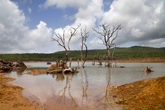 Barren trees in lake. View of barren trees in lake Royalty Free Stock Photo
