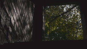 View From The Basement To The Forest Through The Doorway stock video footage