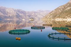 View of Bay of Kotor near fish farm on sunny winter day. Monte. View of Bay of Kotor near the fish farm on a sunny winter day. Montenegro Royalty Free Stock Images