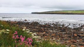 View of the Bay Of Skaill, Orkney, Scotland stock footage