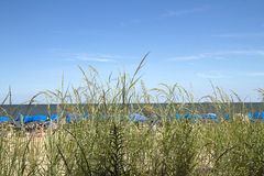 View of Beach Through Grass Stock Image