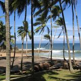 View of a Beach in Kovalam. Kovalam, India - June 02, 2004 : Palm trees in a Beach in Kovalam royalty free stock images