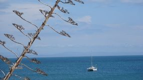 Tree, sea, yacht, sky and mountains far away Stock Images