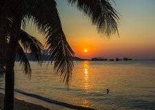 A view of a beach with palm trees Royalty Free Stock Image