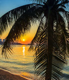 A view of a beach with palm trees Royalty Free Stock Photos
