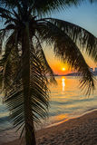 A view of a beach with palm trees Royalty Free Stock Photo