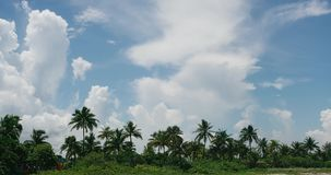 View of the beach and palm trees swaying in the wind. Cloudy sky Cuba. Timelapse. The movement of clouds in the sky resort of Varadero, view of the beach and stock video