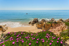 View of the beach from the top spring flowers. Portugal .. Royalty Free Stock Image