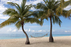 View from the beach on a tropical island in the Indian Ocean. Type of beach on a tropical island in the Indian Ocean with coconut palms and hammock Royalty Free Stock Photos