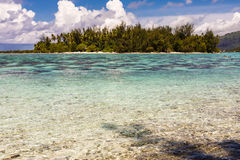 View from the beach on a tropical island. Overgrown with palm trees, French Polynesia royalty free stock images
