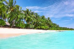 View of beautiful beach with tropical palms. At resort Stock Photo