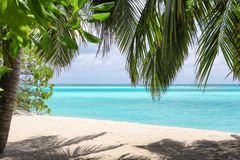 View of beautiful beach with tropical palms. At resort stock images