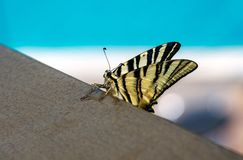 Beautiful butterfly showing her beauty Royalty Free Stock Image