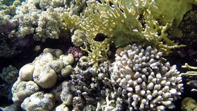 View of beautiful corals and fishes on seabed stock video footage