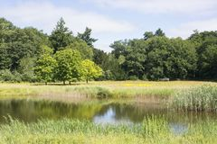View on a beautiful Dutch summer landscape with grass, trees, a pond, wild flowers. Ideal area and environement for walking, relaxing, hiking, enjoying nature royalty free stock photography