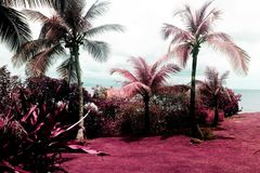 A view of a beautiful garden and palm trees in Vieques, Puerto Rico in color infrared.  royalty free stock photography