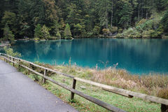 View of beautiful green lake with pine forest in Autumn, Switzer Royalty Free Stock Image