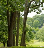 View. A beautiful green view of  trees on a hill and beyond Stock Photography