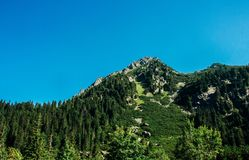 View of beautiful rocks and forest in the summer mountains stock images