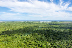 View of the beautiful jungle leaving far to the ocean stock images