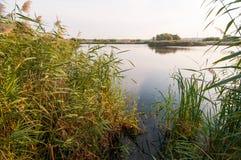 View of a beautiful lake in Vacaresti Nature Park, Bucharest City, Romania. Image of a beautiful lake with reeds and in Vacaresti Nature Park, Bucharest City Royalty Free Stock Photo