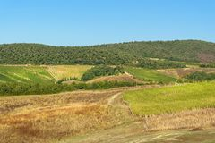 View of beautiful landscape of hills and fields near Asciano. Tuscany, Italy royalty free stock image