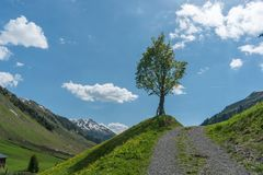 Lone tree on the side of a gravel country lane with blue sky and moutain landscape behind Stock Photo