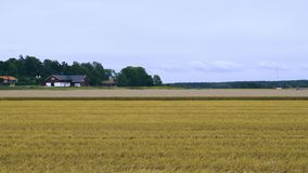 View of beautiful nature landscape with rye field harvested half way on blue sky and white clouds background. Sweden. Europe stock footage