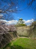 View of beautiful Osaka castle through cherry blossom branches, stone bank moat and grass lawn with blue sky background Stock Photos