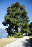 View of beautiful park of Villa Melzi Stock Photos