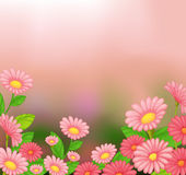 A view of the beautiful pink flowers Royalty Free Stock Image