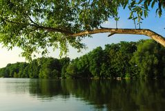View of the beautiful river and forest Stock Photography