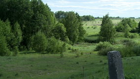 View of beautiful summer scenes - forest and field stock video