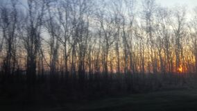 View of a beautiful sunrise from the window of a moving car or a train. View from the window of a train or car, through the branches of the trees you can see the stock video
