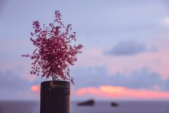 View of a beautiful sunset and a flower pot  at the coast of central Corfu Greece.  Royalty Free Stock Images