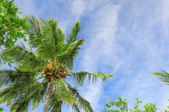 View of beautiful tropical palm against   sky Stock Photography