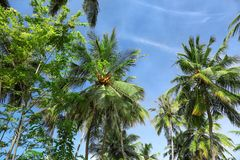 View of beautiful tropical palms against sky. View of beautiful tropical palms against blue sky Stock Photo