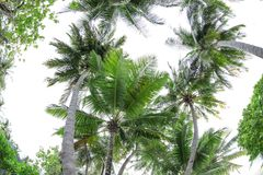 View of beautiful tropical palms. At resort Stock Photography