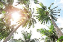 View of beautiful tropical palms. At resort Royalty Free Stock Photos