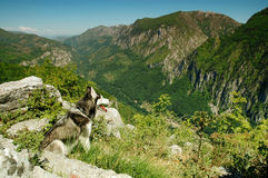 View of a beautiful valley with a husky dog Stock Photos