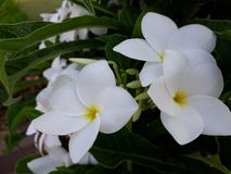 A view of beautiful white flowers stock image