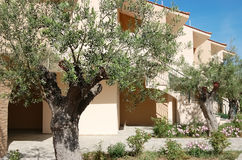 View of beige buildings and olive trees in the Greek hotel. Royalty Free Stock Photography